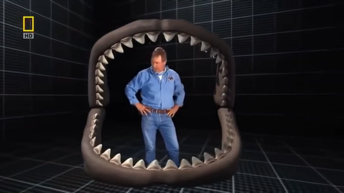 Jaws and teeth of a Megalodon