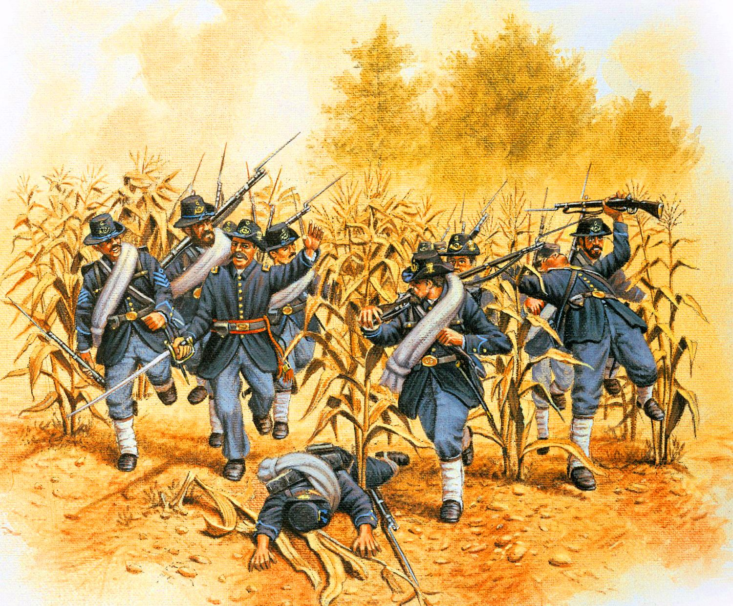 Battle of Antietam cornfield